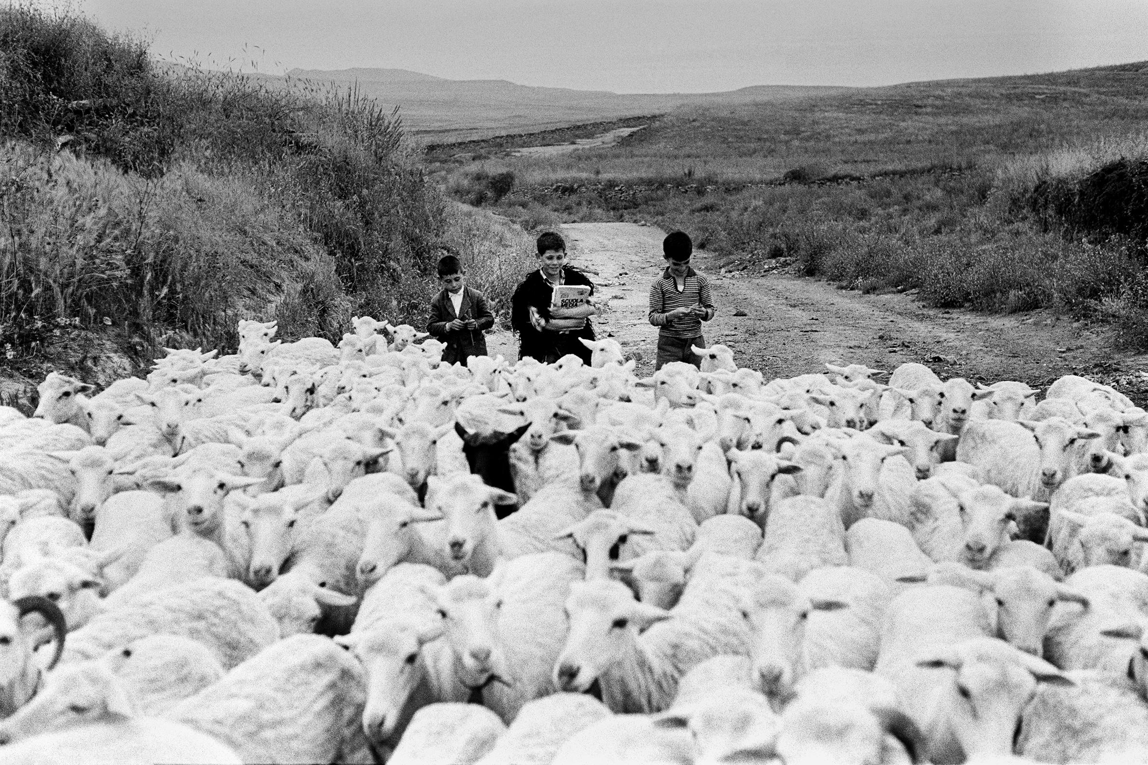 SCUOLA - 1 – Pastori che vanno a scuola, Senis, Sardegna, 1964
