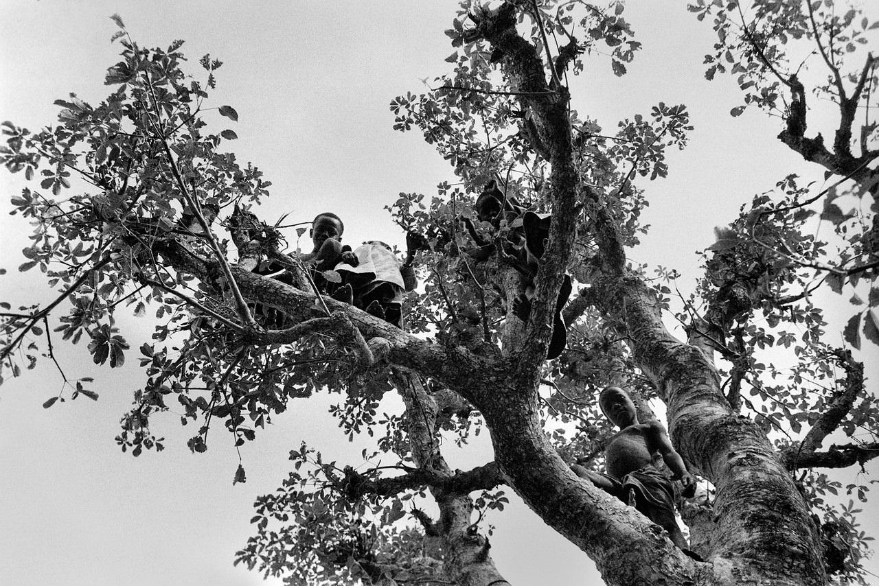 020 Bambini sull'albero, Dakar, Senegal, 1970