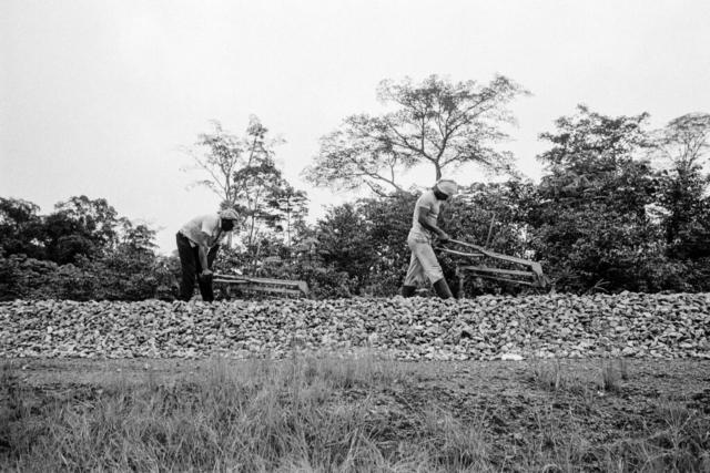 025 Lavori sulla ferrovia transgaboniana, Gabon, 1978
